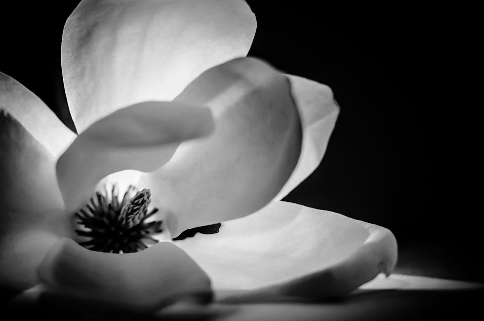Frühlingsblüher II