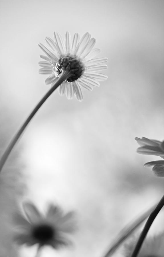 Frühlingsblümchen ....