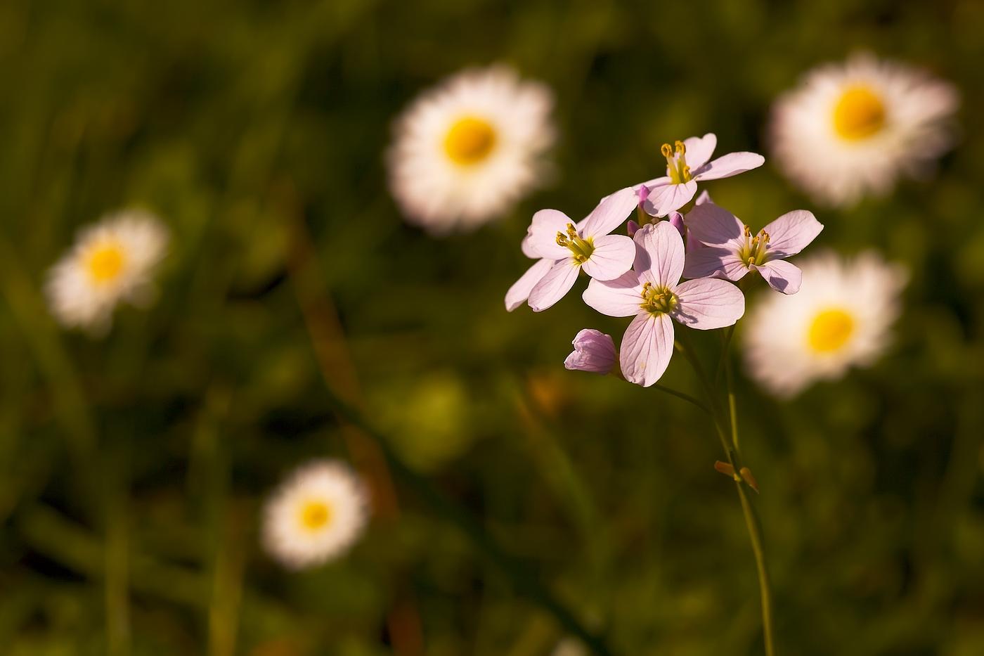 Frühlingsblütenmix