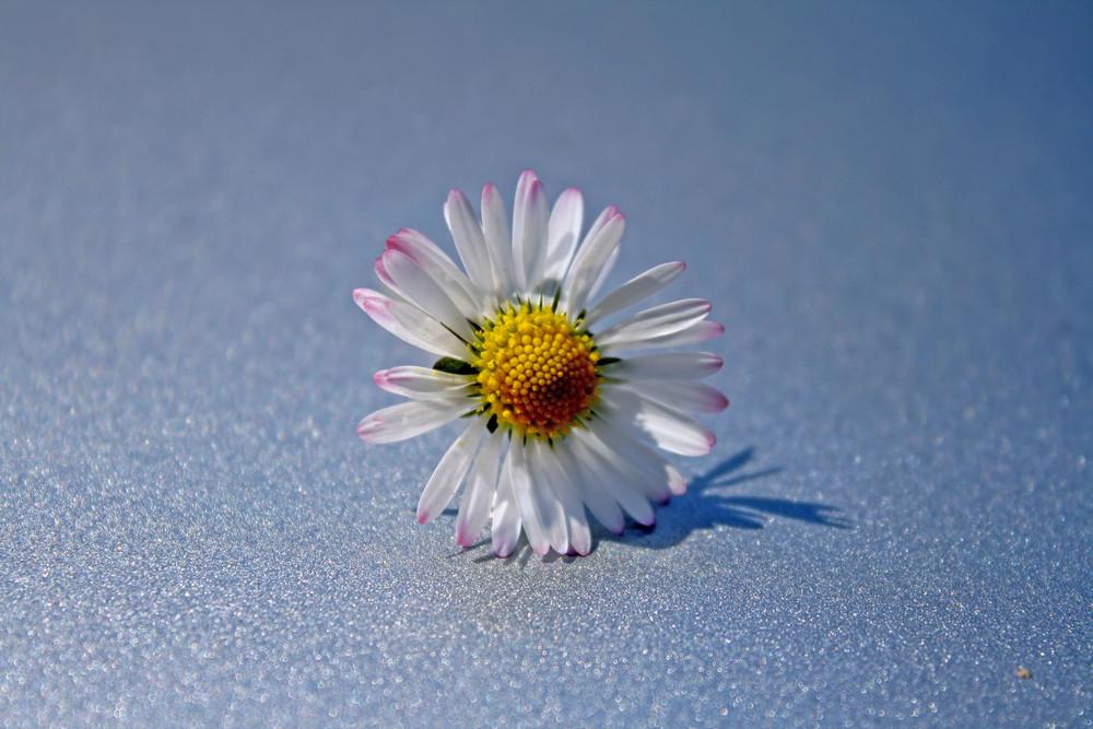 frühlingsblume außerhalb der wiese