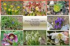 Frühlingsblumen -1-