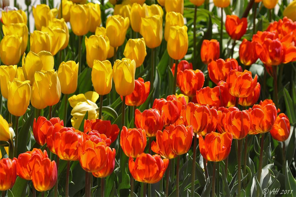 Frühlingsblumen...