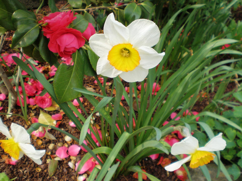 Frühlingsblumen Foto & Bild | pflanzen, pilze & flechten ...