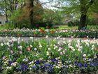 Frühlingsblumen I