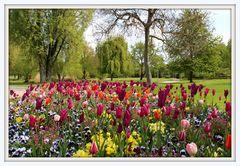 Frühlingsblumen im Park