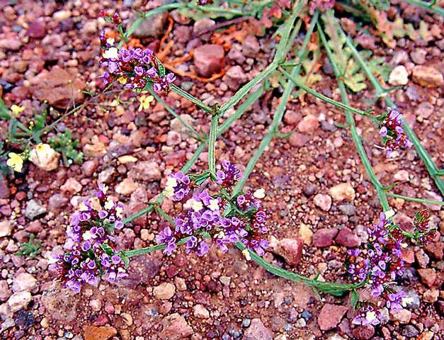 Frühlingsblumen im Staub