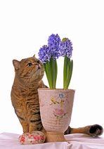 Frühlingsblumenliebhabärchen