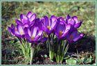 < Frühlingsboten>