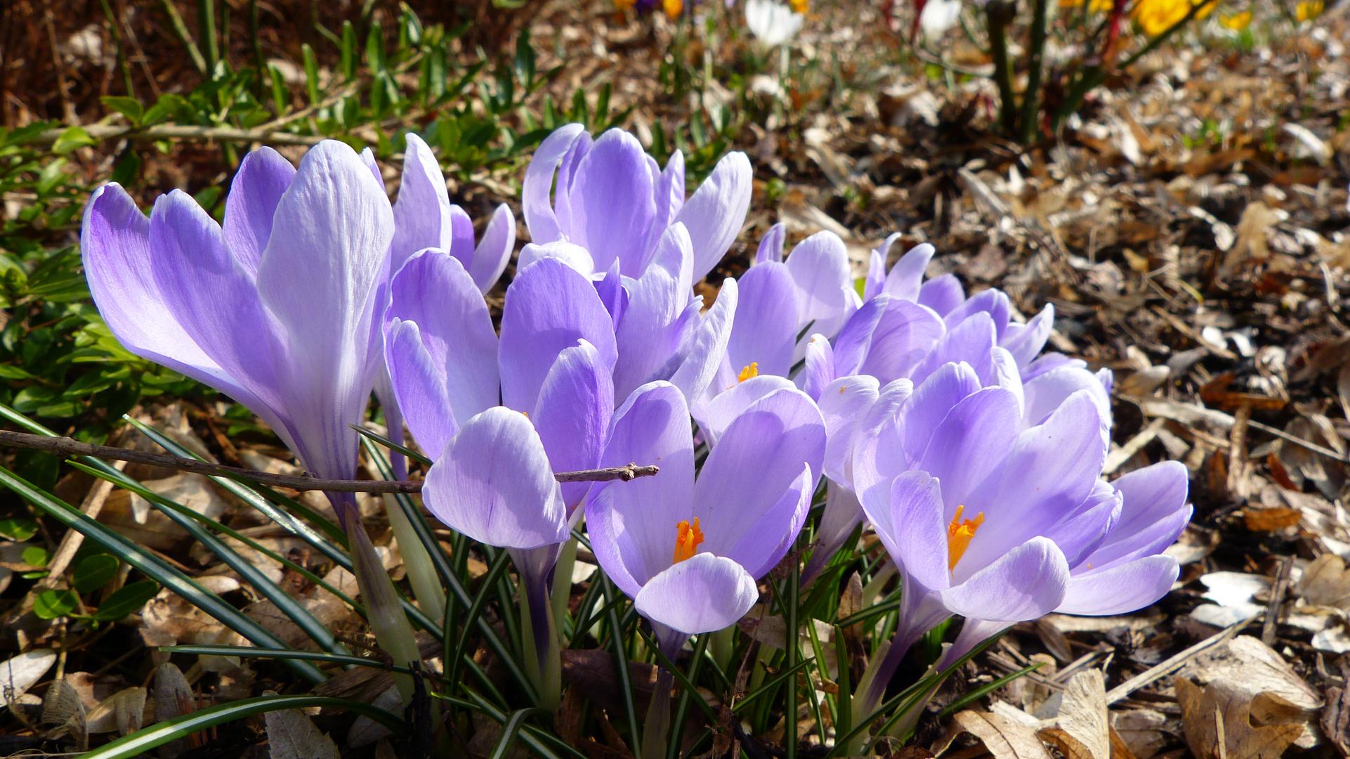 Frühlingsboten 14