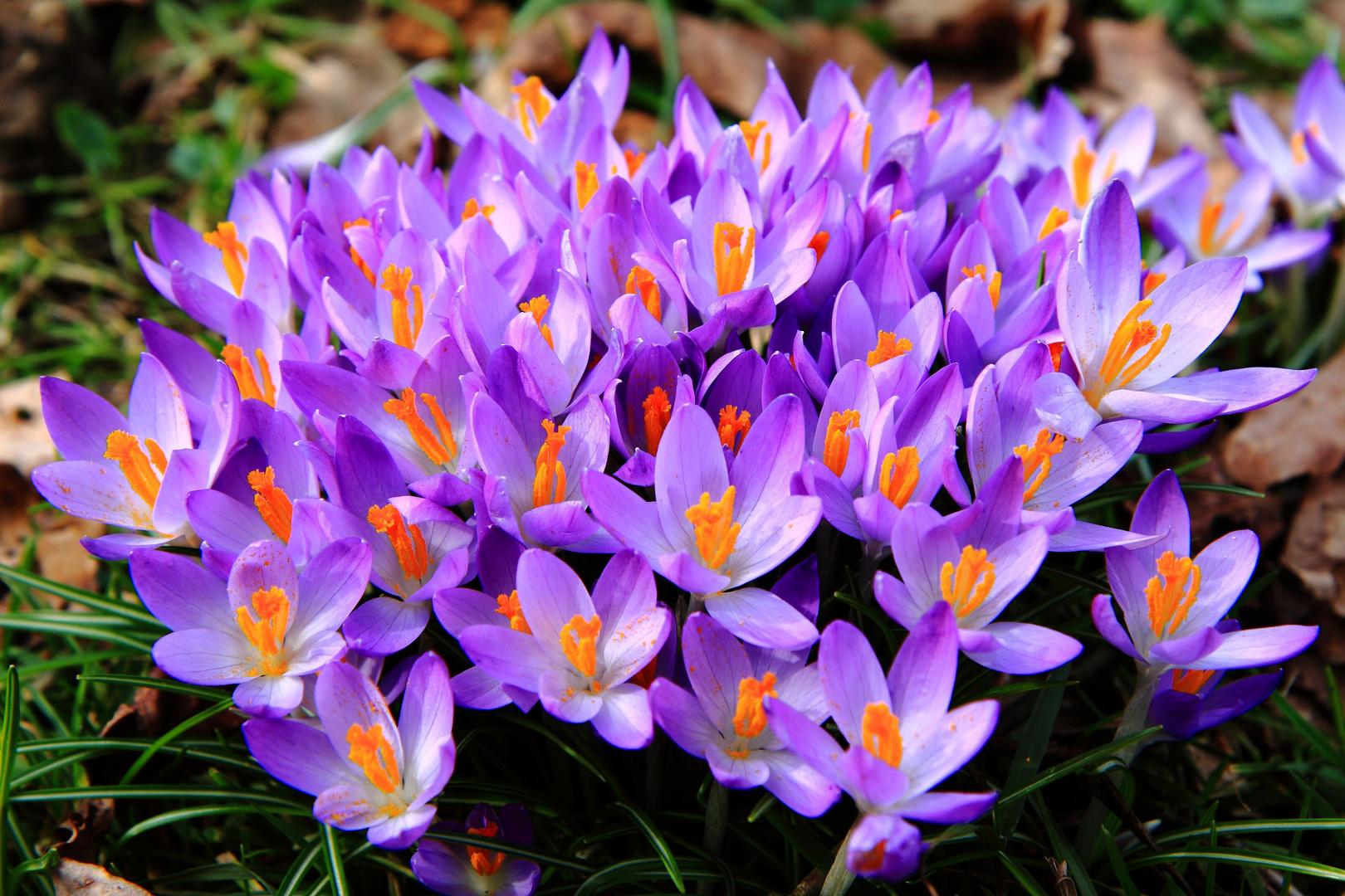 Frühlingsboten-2