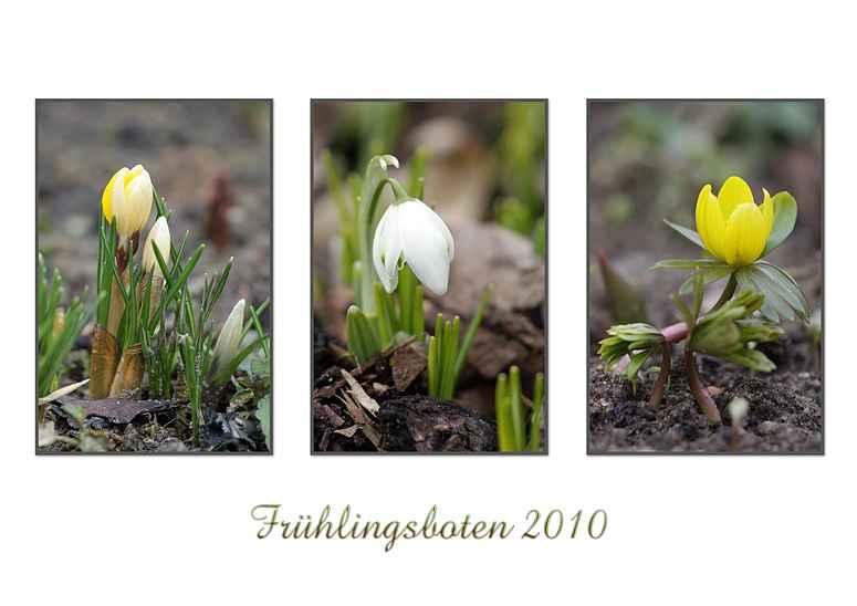 Frühlingsboten 2010