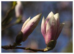 Frühlingsboten....