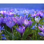 Frühlingsboten...... :-)))