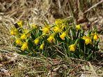 Frühlingsboten auf Borkum