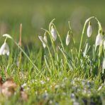...Frühlingsboten...