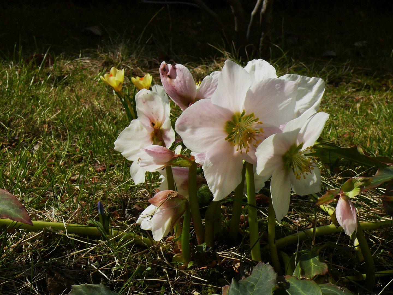 Frühlingsboten im März...