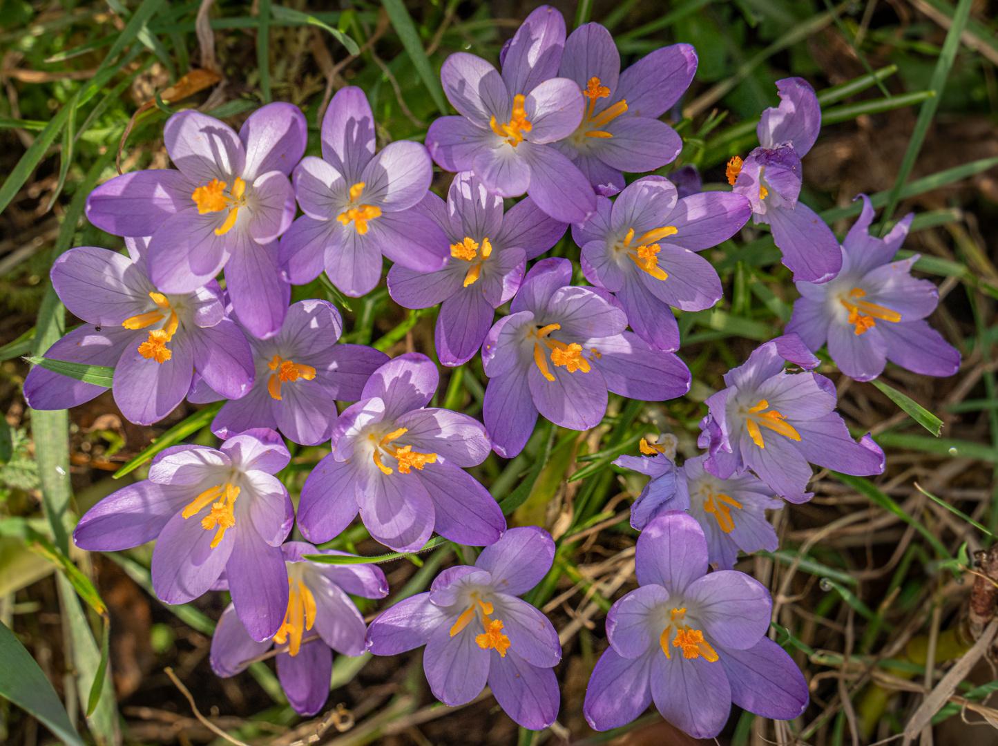 Frühlingsboten IX