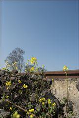 Frühlingsboten VI
