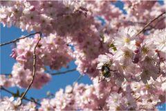 Frühlingsboten VII