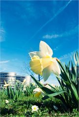 Frühlingsboten VIII