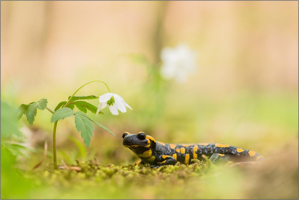 ~ Frühlingsduft ~