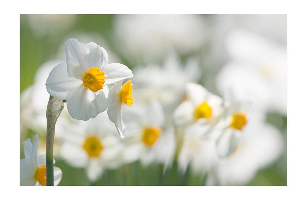Frühlingsduftig