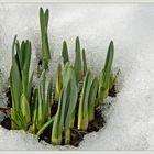 Frühlingsdurchbruch
