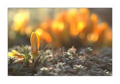 Frühlingserleuchten