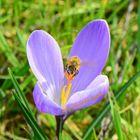 Frühlingserwachen 1