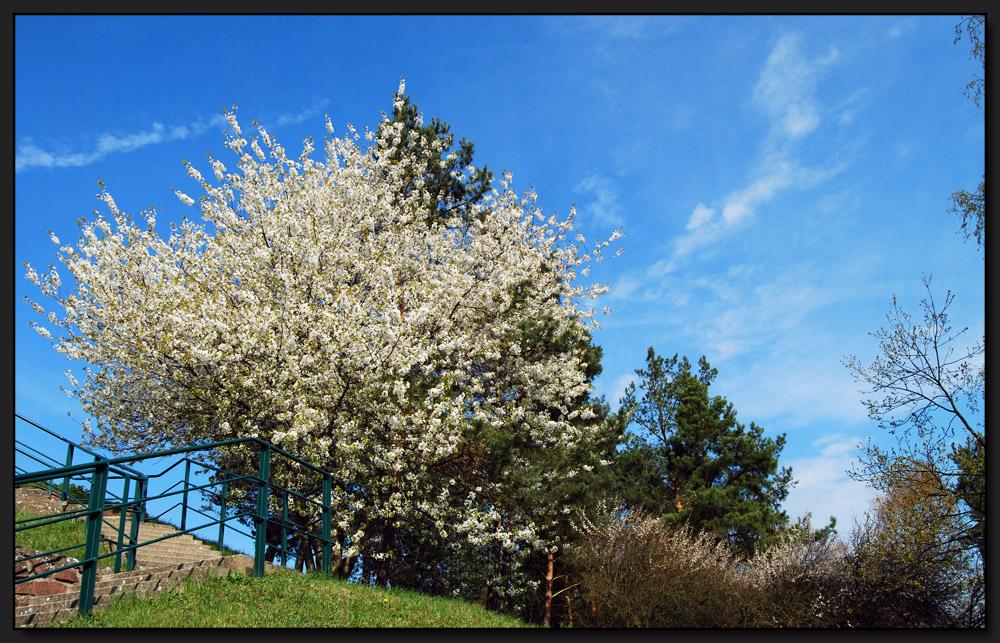 ...FrühlingsErwachen...