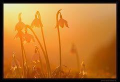 - - - Frühlingserwachen - - -
