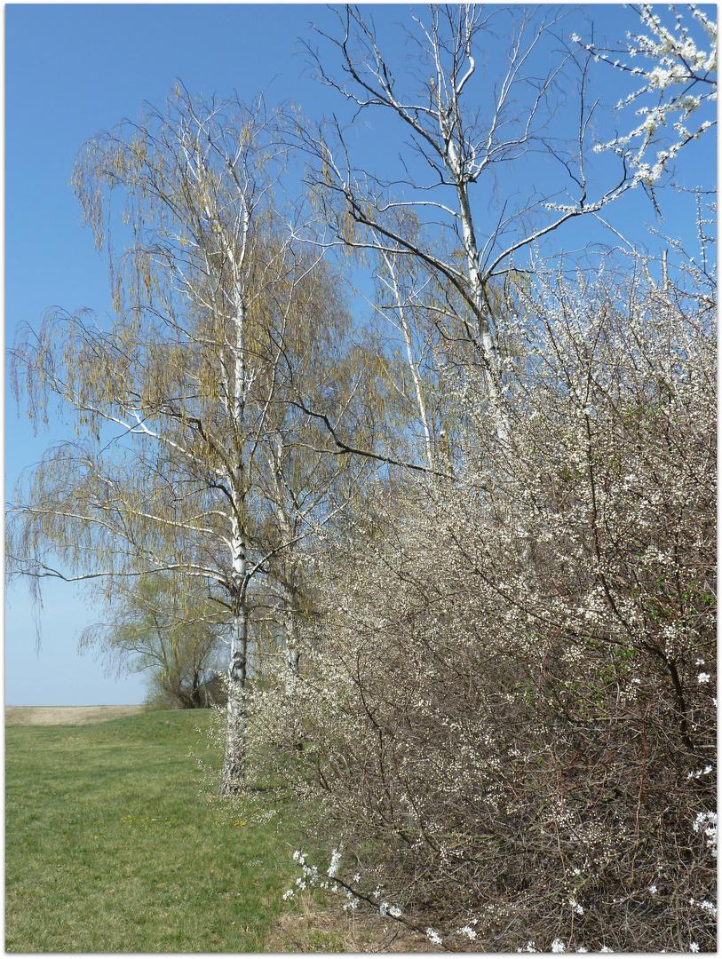 Frühlingserwachen 3