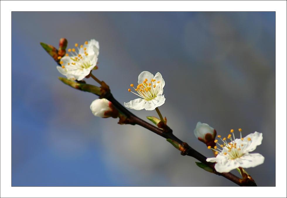 *. Frühlingserwachen [3] ./*