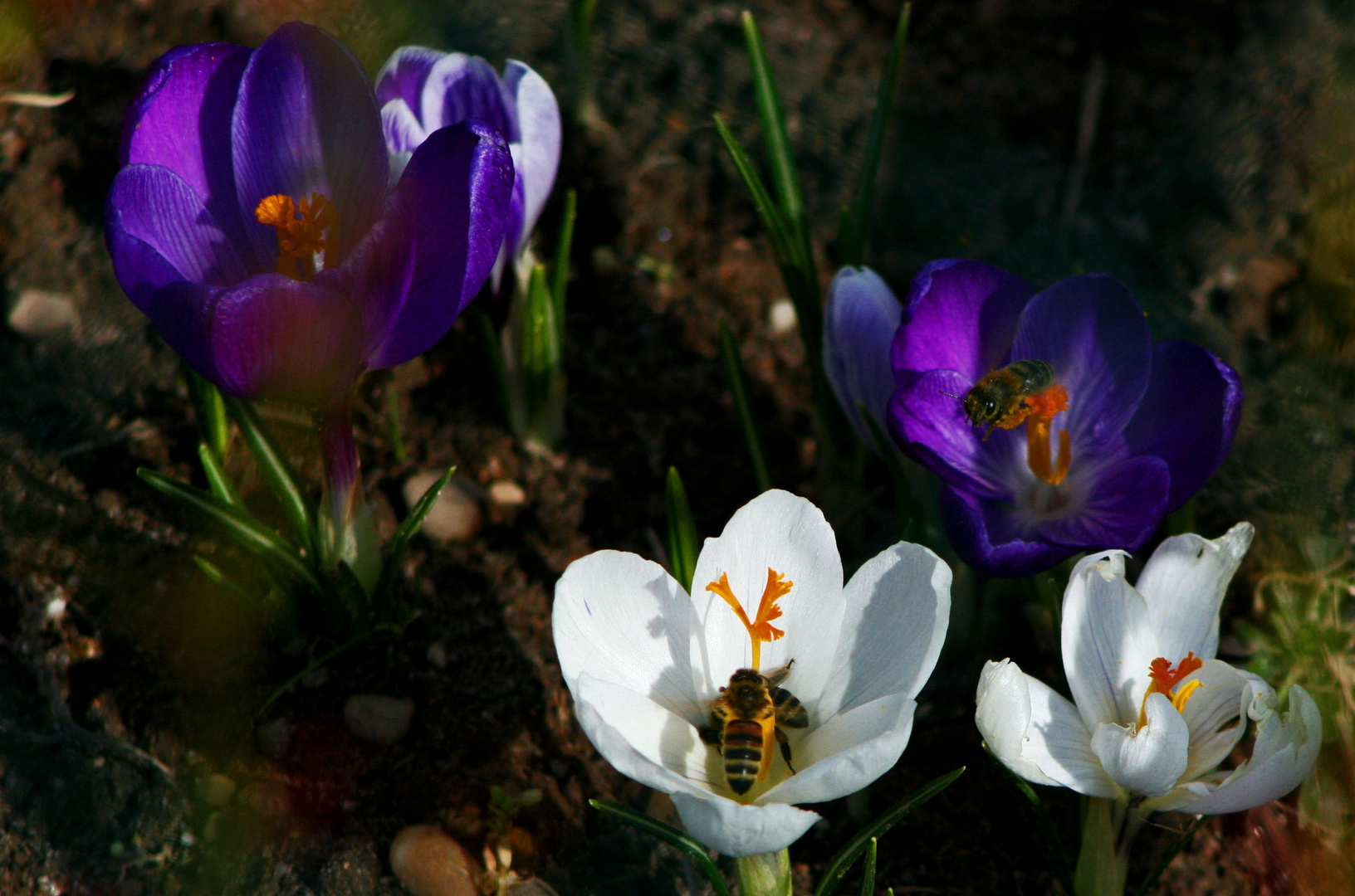 Frühlingserwachen...