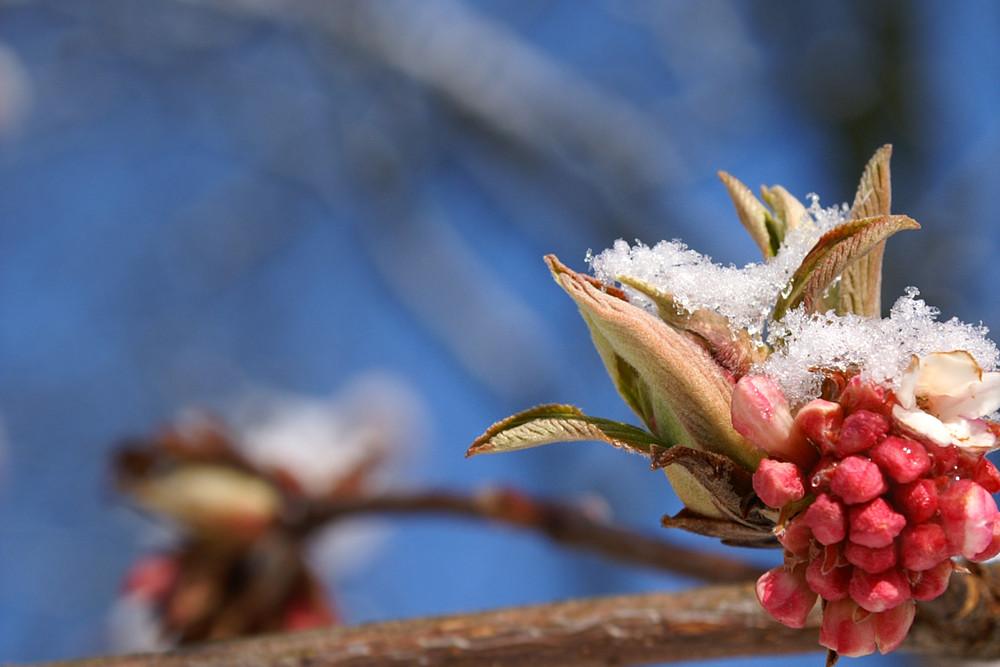 Frühlingserwachen ;)