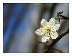 *\. Frühlingserwachen ./*
