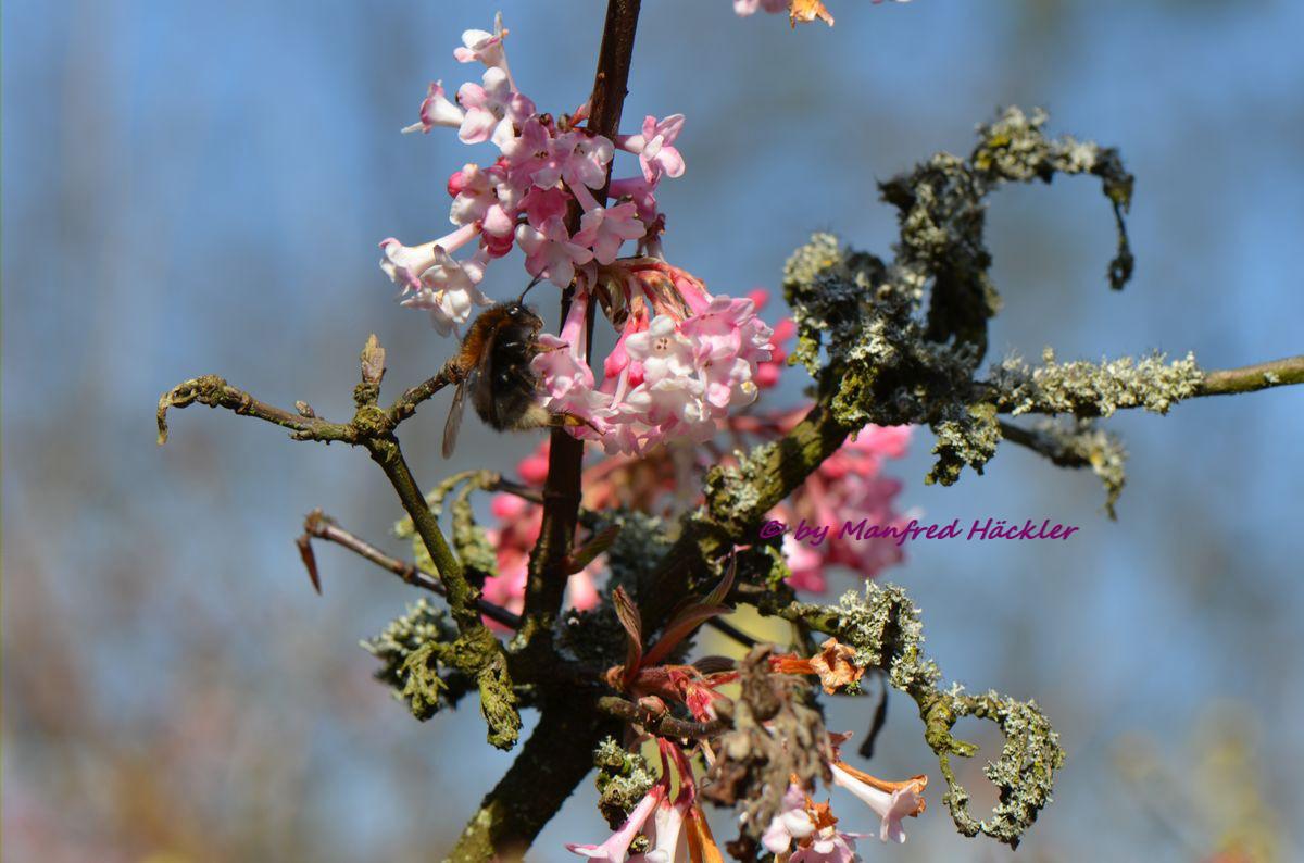 Frühlingserwachen 7