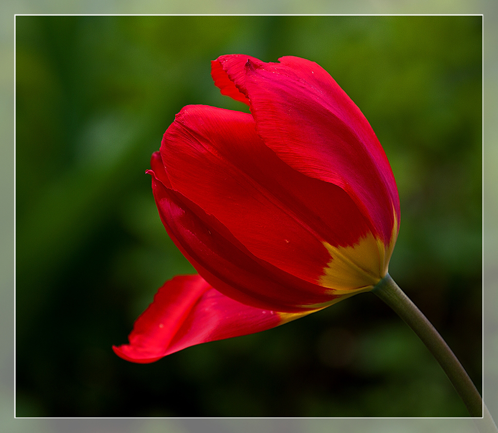 Frühlingserwachen 8