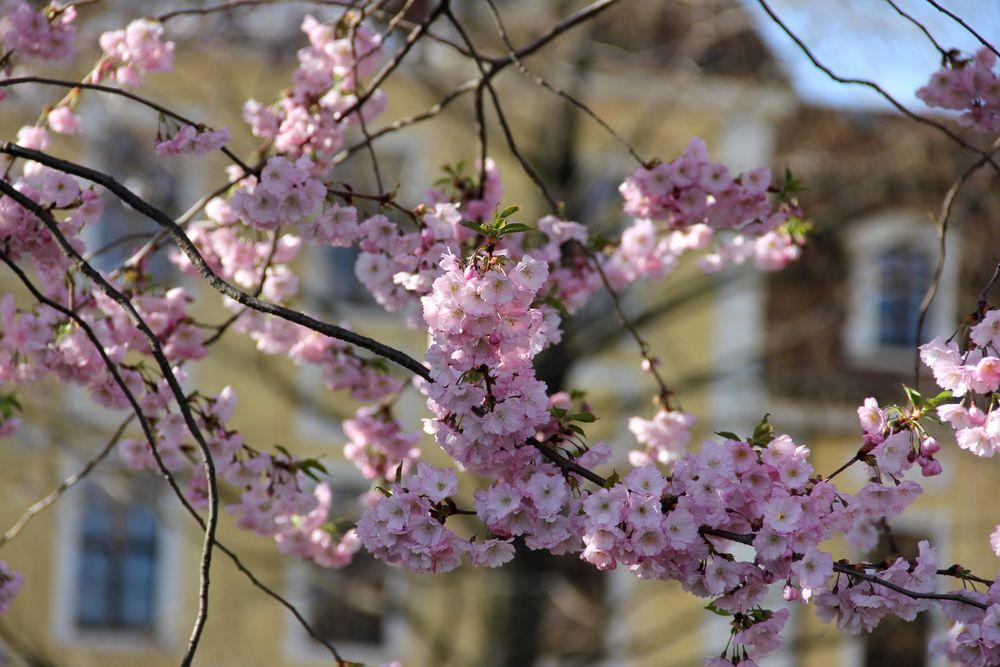 Frühlingserwachen am 1. April 2012