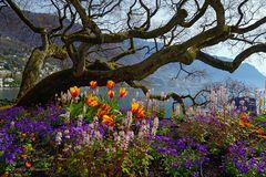 Frühlingserwachen am Genfersee