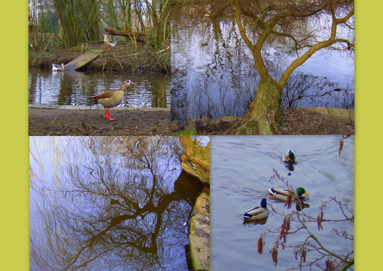 -Frühlingserwachen am See...