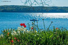 Frühlingserwachen am Überlinger See