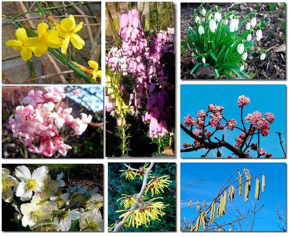 Frühlingserwachen - Bilder eines Spazierganges am 8.2.11