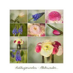 Frühlingserwachen ~ Blütenzauber...