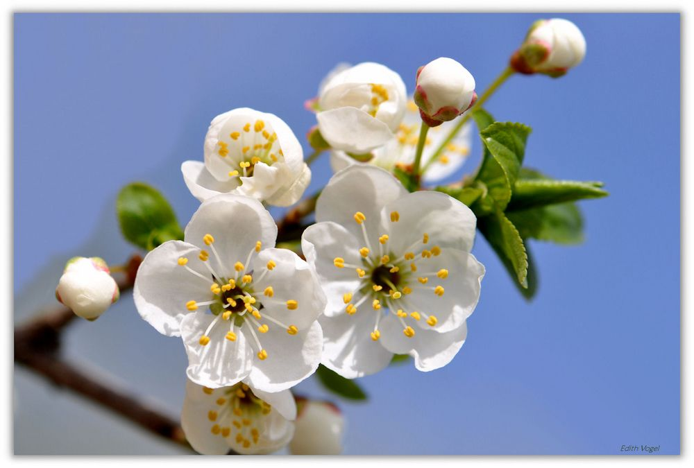 Frühlingserwachen.......