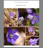 Frühlingserwachen ... endlich wieder Farbe in der Natur !!