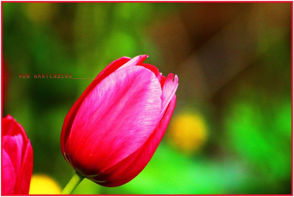 Frühlingserwachen I
