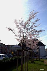 Frühlingserwachen im Knechtstetterhof