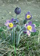 Frühlingserwachen in der Garchinger Heide