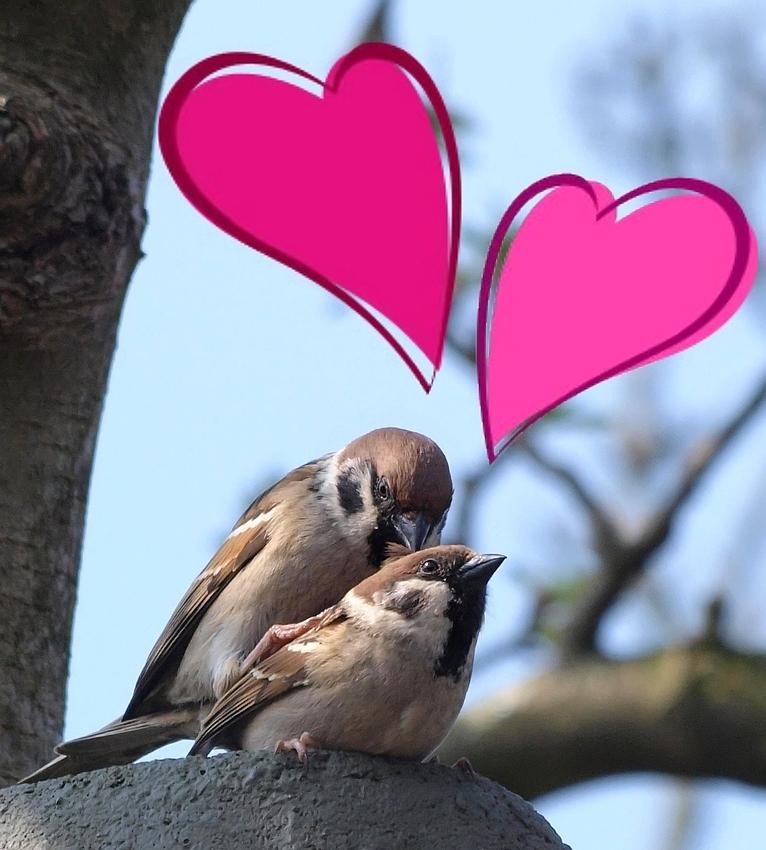 """Frühlingserwachen- .. """" In Love """" .. ( oder ) .."""